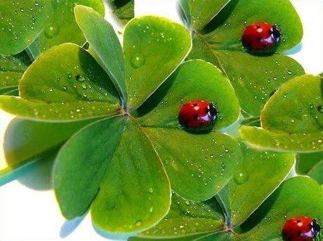 four leaf clover .jpg