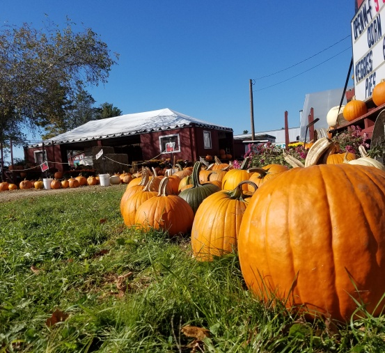 fury - pumpkins