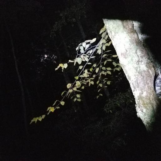 Twilight Glowing Tree