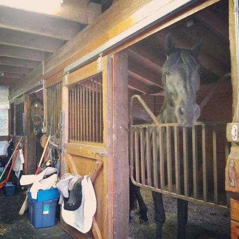 twilight horses