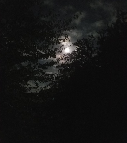 Twilight Moon and Branches