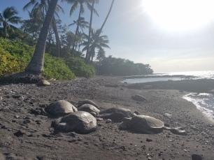 sea turtle siesta