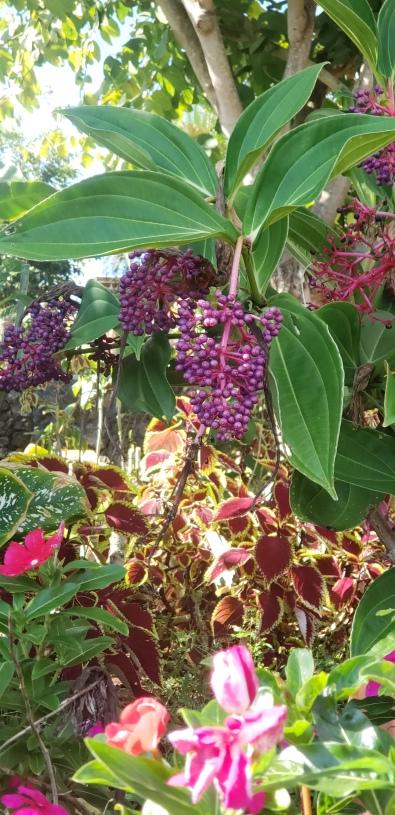 wednesday's purple berries